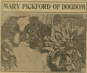 """Mary Pickford of Dogdom"" - Academy Scrapbook #21 detail"