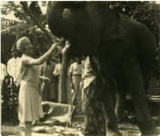Mary Pickford feeding 'Jumbo' a plantain - 1927